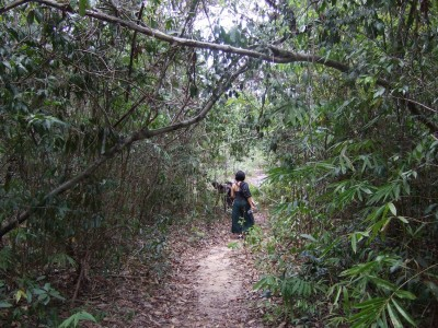 Ban Hatkai Bambus